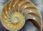 free-spirit nautilus-shell